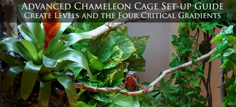Chameleon Cage Setup
