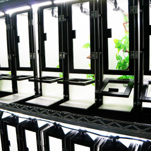 Cleaning rack row of baby chameleon cages. Dragon Strand Nursery Cage System