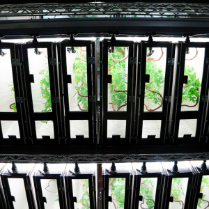 Rack row of chameleon baby cages. Nursery Cage System