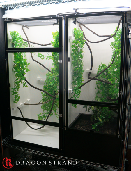 Chameleon Cages set up for male and female egg laying species