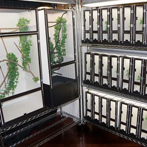 Chameleon Cages Rack Breeding System