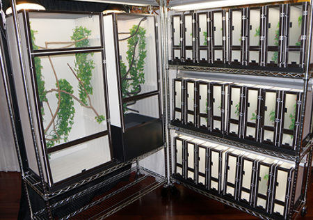 Chameleon Cages Rack Breeding System