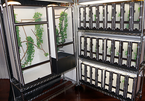 Rack Breeding System of Chameleon Cages