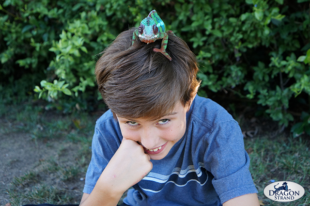 Chameleons and Kids: A Boy and his Chameleon