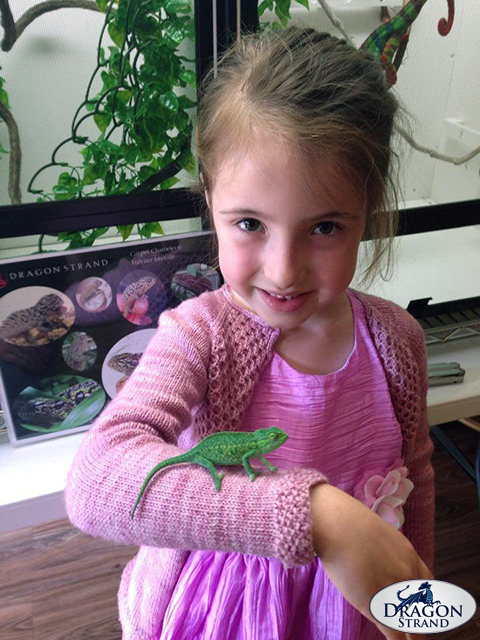 Chameleons and Kids: Little Girl and Her Chameleon