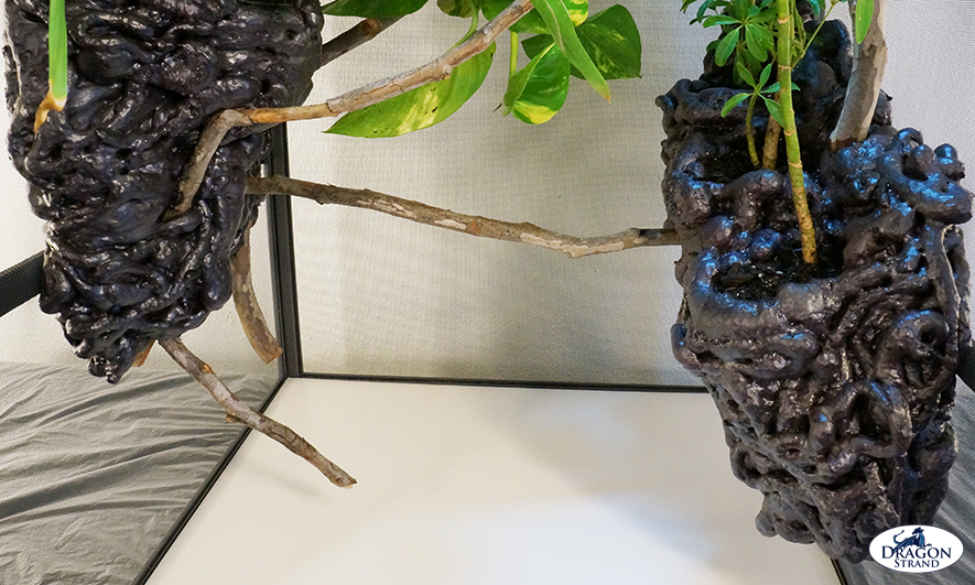 Chameleon Cage Setup: Branching the Lower Level