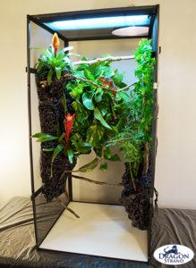Naturalistic Adult Chameleon Cage Setup