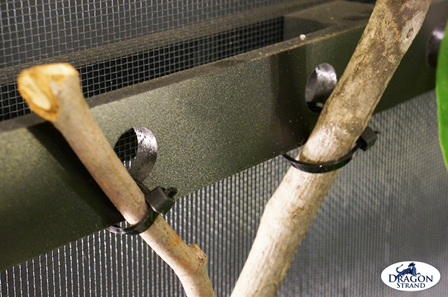Chameleon Cage Setup: Anchoring branches