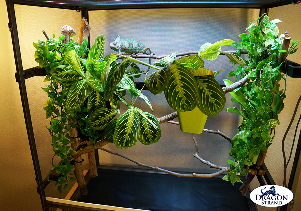 how to build a chameleon screen cage