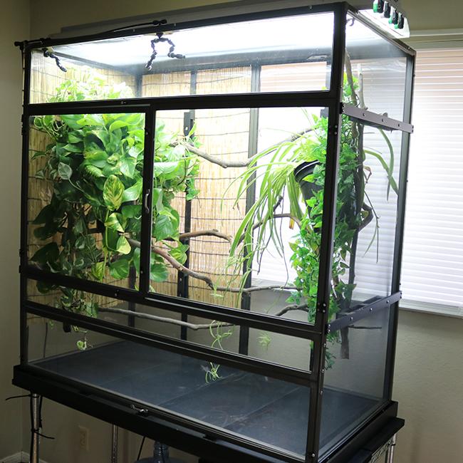Large Atrium Chameleon Cage