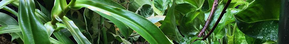 green strip for chameleon cage