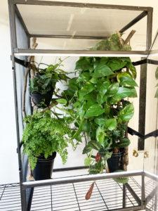 Medium Tall Atrium with Plants