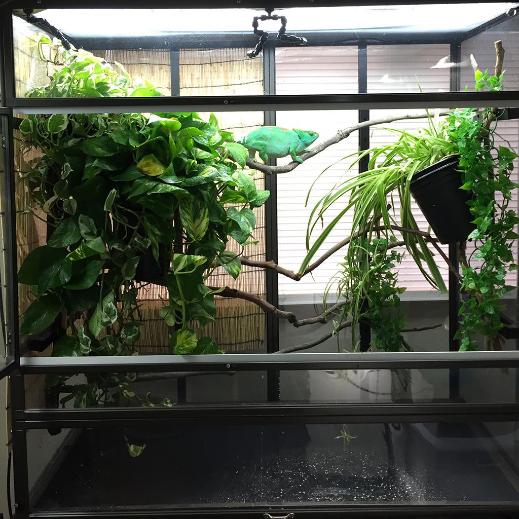 Large Atrium Cage