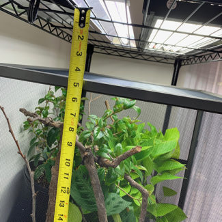 Measuring heights