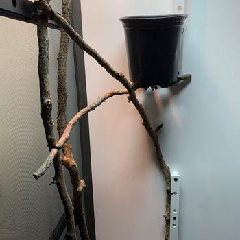 horizontal branches