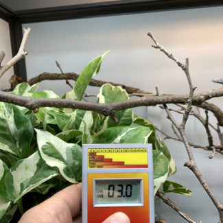 UV Index measured below the basking branch
